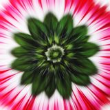 zoom kwiatów fotografia royalty free