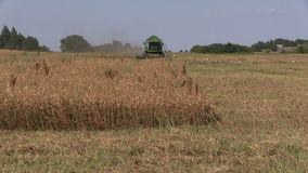 Zoom out of farm combine work in corn field with standing stork stock video