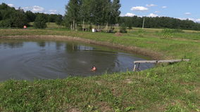 Zoom out girl jump in rural pond. Splash wave in pond on summer  stock video footage