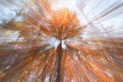Zoom out od drzewa Zdjęcia Royalty Free