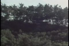 Zoom out shot of lush foliage stock video footage