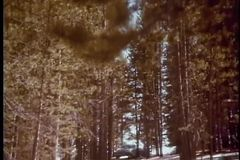 Zoom out to car parked in forest stock video