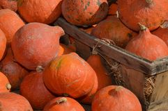 Zoom on Pumpkins marrow on a weekly market. In the south of france Stock Image