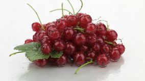 Zoom of red currant in dewdrops. stock footage