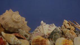 Zoom refraction of sun rays through water on seashells in blue water. stock video footage