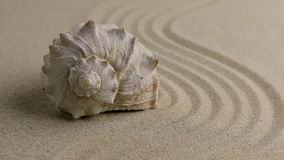 Zoom seashell lying on the sand beach. stock video footage