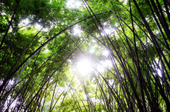 Zoom shoot bamboo Royalty Free Stock Photo