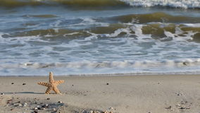 Zoom starfish sticking in the sand beach. stock video footage