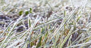Zoom in timelapse of frost on grass melting in the morning sunlight
