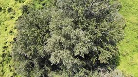 Zoom in to the top of the tree on green wetland stock video footage
