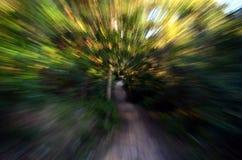 Zoom w las z wysoką prędkością textured tło Zdjęcie Stock