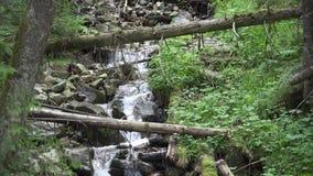 Zoom wewn?trz Krajobrazowy halny strumień wśród drzew zbiory