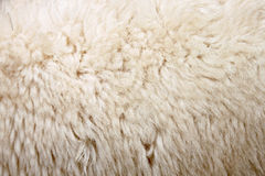 Zoom Wool of sheep. Royalty Free Stock Images