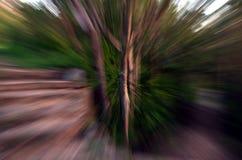 Zooma in i en skog med den hög hastigheten texturerad bakgrund Fotografering för Bildbyråer