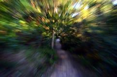 Zooma in i en skog med den hög hastigheten texturerad bakgrund Arkivfoto