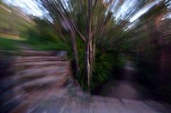 Zooma in i en skog med den hög hastigheten texturerad bakgrund Royaltyfria Bilder