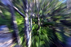 Zooma in i en skog med den hög hastigheten texturerad bakgrund royaltyfri fotografi