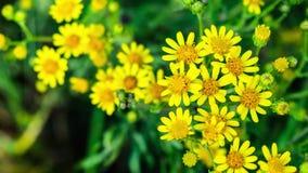 Zooma in på gula blommor stock video