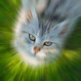 Zoomande katts huvud Arkivbild