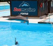 Zoomarine, Wasserpark gelegen in Torvaianica, Rom Lizenzfreie Stockfotos