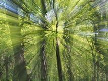 Zoombristning av träd Arkivfoto