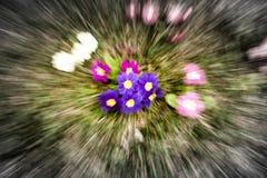 Zoombristning på blommor Arkivfoton