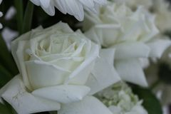 Bouquet of purity Royalty Free Stock Photography