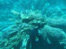 Zoomimg zur Unterseite des Meeres Lizenzfreie Stockfotos