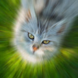 Zooming cat's head. On green grass with sharp eyes Stock Photography