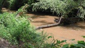 Georgia, Big Creek, Zooming in on a dead tree that is laying across Big Creek. Zooming in on a dead tree that is laying across Big Creek stock video footage
