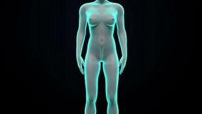 Zooming female body scanning womb, blue X-ray image. stock footage