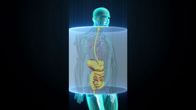 Zooming Human the internal organs, Digestion system.Blue X-ray light.