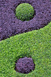 Zooming into the Taiji. Zooming into two plants with different colored leaves, one purple and one green, that form up two circles separated by a curve, which is Royalty Free Stock Image