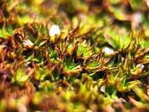 Zooming to the moss in the platform. Close up macro of natural moss on the walk platform Royalty Free Stock Photo