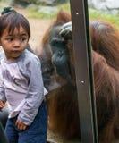 Zooorangutang med barn Fotografering för Bildbyråer