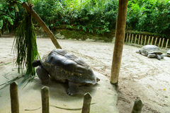 Zoopark in Republic of Singapore Royalty Free Stock Photos