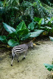 Zoopark in Republic of Singapore Royalty Free Stock Photography
