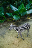 Zoopark in Republic of Singapore Royalty Free Stock Photo