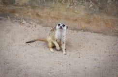 Zoos de Meir Cats photos stock