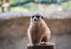 Zoos de Meir Cats photographie stock libre de droits