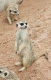 Zoos de Meir Cats image libre de droits