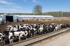 Zootecnia di industria, di azienda agricola, del gente e di agricoltura Immagini Stock