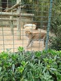 Zootier Lizenzfreie Stockbilder