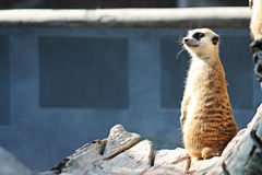 Zootier Lizenzfreies Stockfoto