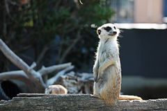 Zootier Stockfoto