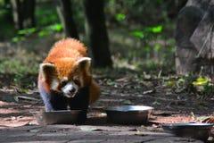 Zoowild lebende tiere Lizenzfreies Stockfoto