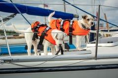 Zorg over huisdieren De veiligheid is eerste Royalty-vrije Stock Fotografie