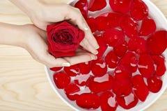 Zorg van de kuuroord de Natuurlijke Hand met Rode Rozen Houten Achtergrond Stock Foto