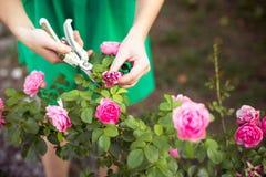Zorg van tuin Royalty-vrije Stock Foto's