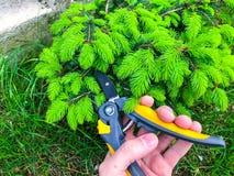 Zorg van tuin, het snoeien van takken, hand met tuinhulpmiddel stock afbeeldingen